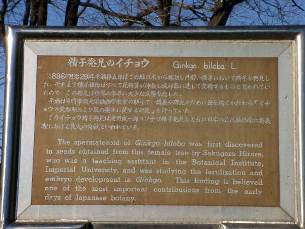 みどころいっぱい小石川散歩 その3